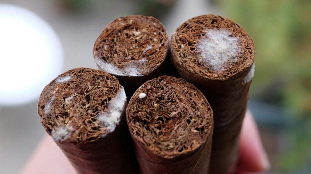 Cigar mould